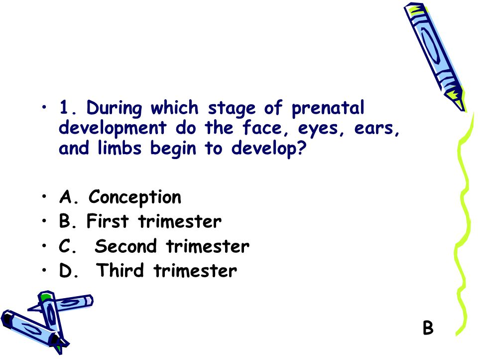1. During which stage of prenatal development do the face, eyes, ears, and limbs begin to develop? A. Conception B. First trimester C. Second trimeste