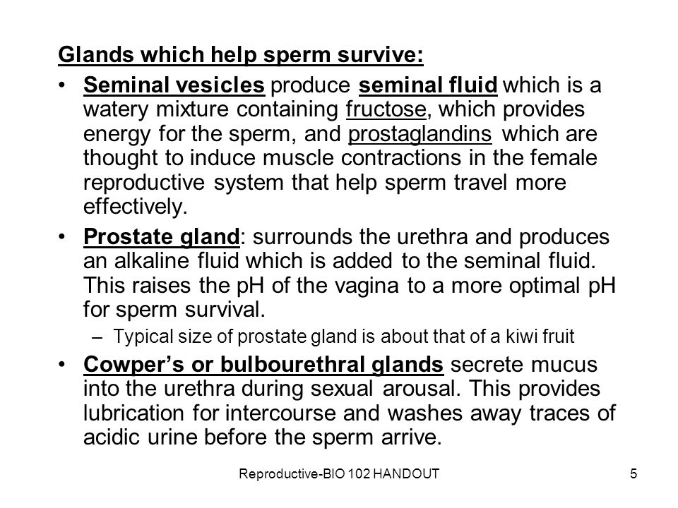 Reproductive-BIO 102 HANDOUT16 –Myometrium: middle, smooth muscle layer, expands during pregnancy, constricts during labor –Perimetrium: Outermost layer –Cervix: narrow opening in lower part of uterus that permits sperm to enter uterus and allows fetus to exit during birth joins vagina, a muscular tube that extends from cervix to exterior –serves as birth canal and female organ for intercourse.