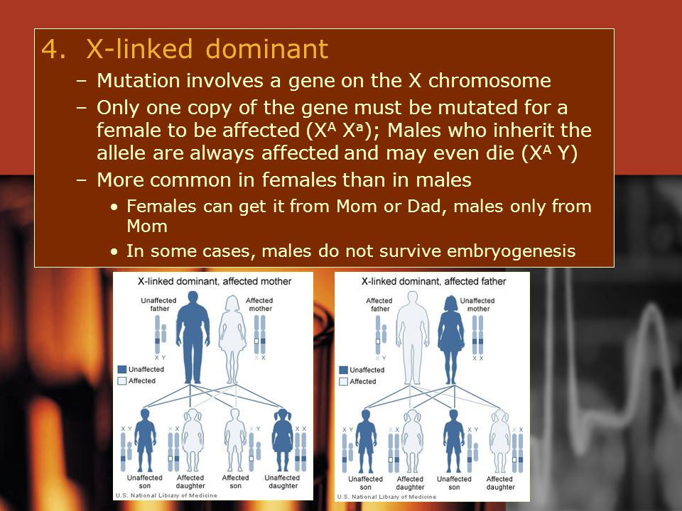 4. X-linked dominant –Mutation involves a gene on the X chromosome –Only one copy of the gene must be mutated for a female to be affected (X A X a );