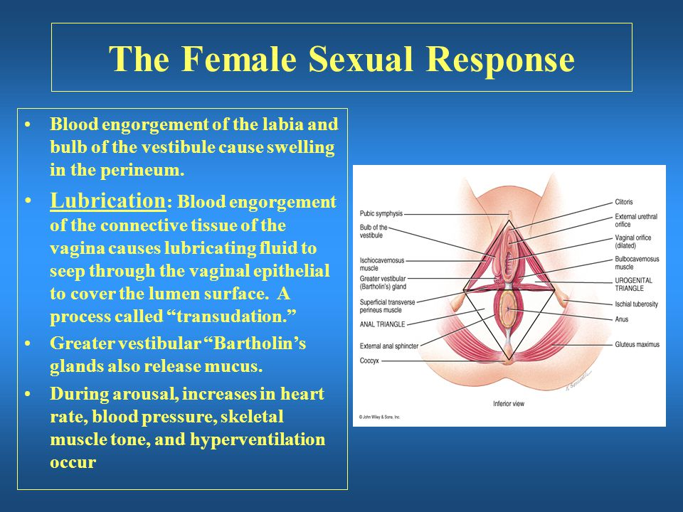 The Female Sexual Response Blood engorgement of the labia and bulb of the vestibule cause swelling in the perineum. Lubrication : Blood engorgement of