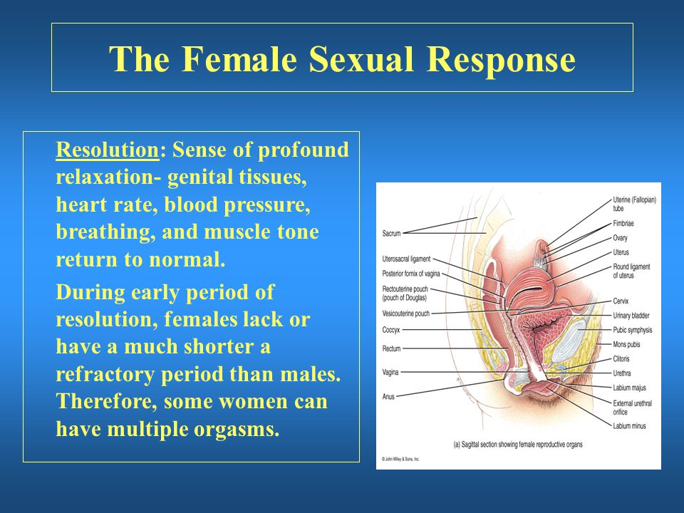 The Female Sexual Response Resolution: Sense of profound relaxation- genital tissues, heart rate, blood pressure, breathing, and muscle tone return to