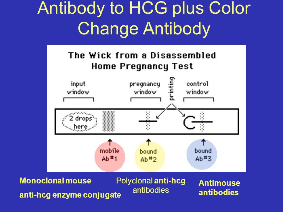Antibody to HCG plus Color Change Antibody Monoclonal mouse anti-hcg enzyme conjugate Polyclonal anti-hcg antibodies Antimouse antibodies