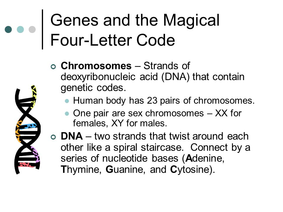 Genes and the Magical Four-Letter Code Chromosomes – Strands of deoxyribonucleic acid (DNA) that contain genetic codes. Human body has 23 pairs of chr