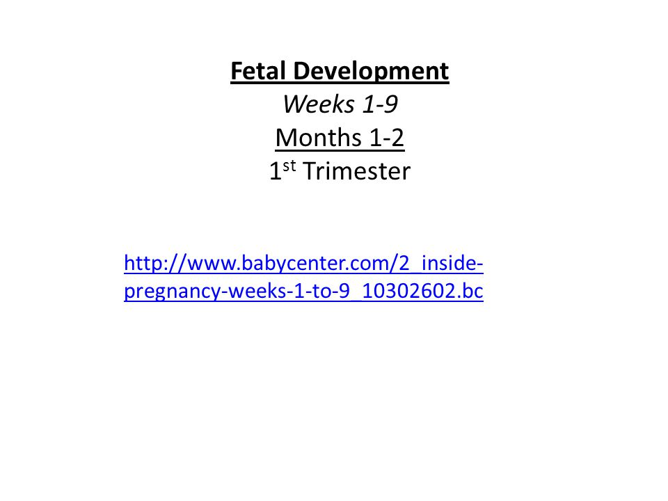 http://www.babycenter.com/2_inside- pregnancy-weeks-1-to-9_10302602.bc Fetal Development Weeks 1-9 Months 1-2 1 st Trimester