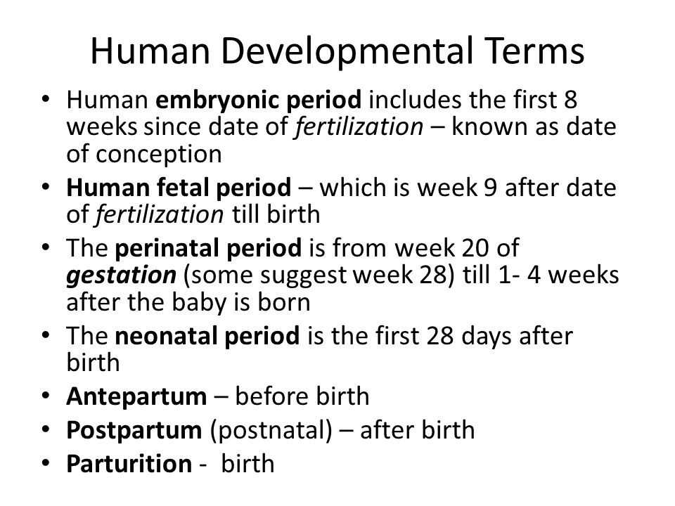 Human Developmental Terms Human embryonic period includes the first 8 weeks since date of fertilization – known as date of conception Human fetal peri