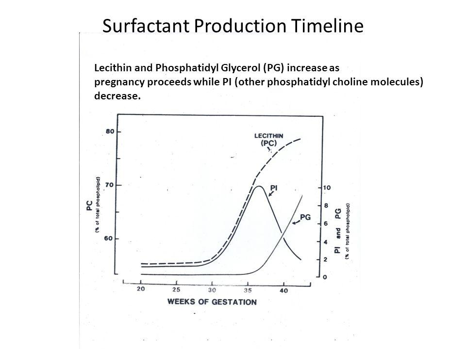 Surfactant Production Timeline Lecithin and Phosphatidyl Glycerol (PG) increase as pregnancy proceeds while PI (other phosphatidyl choline molecules)