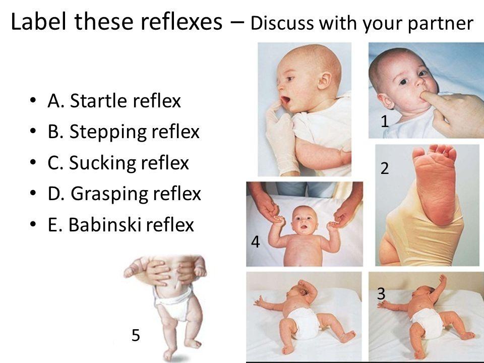 Label these reflexes – Discuss with your partner A. Startle reflex B. Stepping reflex C. Sucking reflex D. Grasping reflex E. Babinski reflex 1 2 3 4