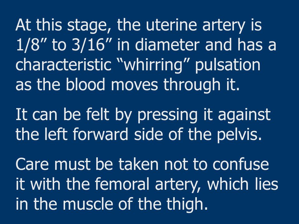 """At this stage, the uterine artery is 1/8"""" to 3/16"""" in diameter and has a characteristic """"whirring"""" pulsation as the blood moves through it. It can be"""