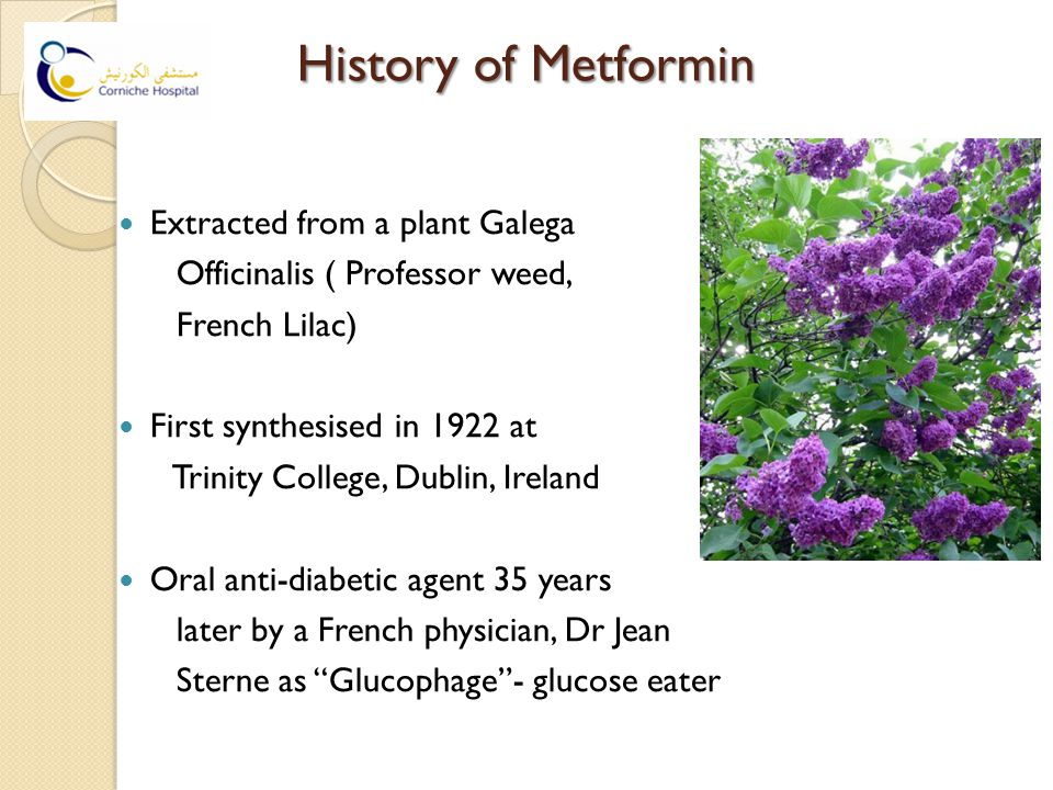 History of Metformin Extracted from a plant Galega Officinalis ( Professor weed, French Lilac) First synthesised in 1922 at Trinity College, Dublin, Ireland Oral anti-diabetic agent 35 years later by a French physician, Dr Jean Sterne as Glucophage - glucose eater