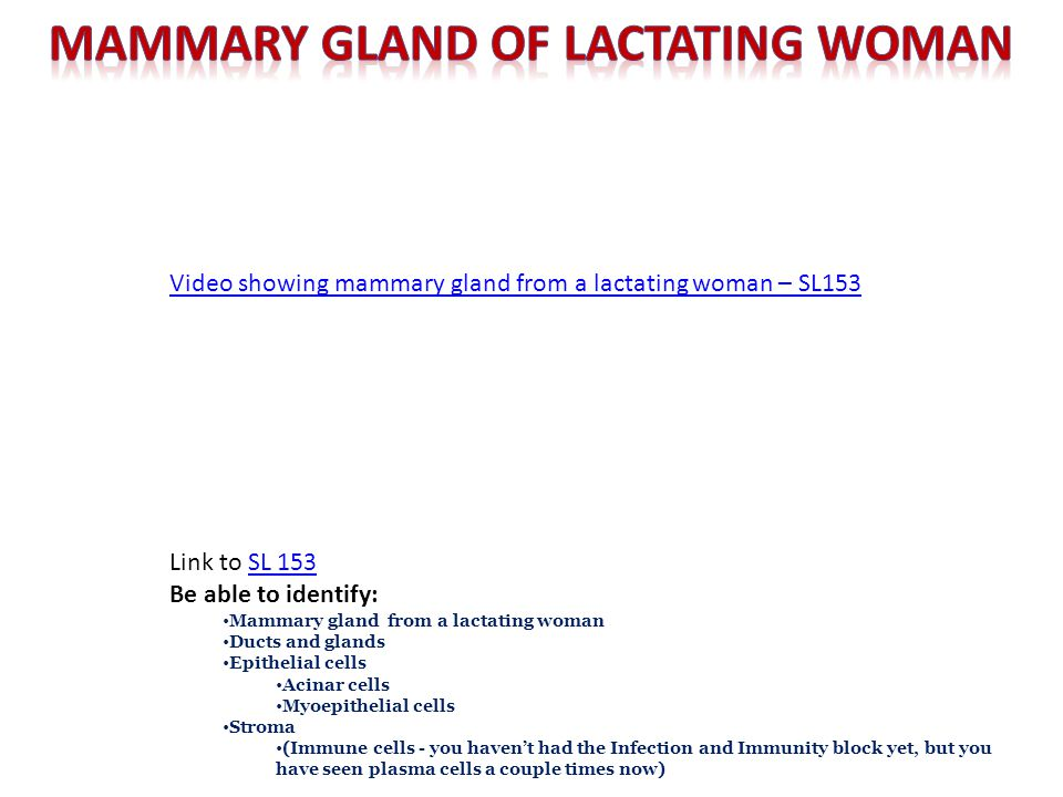Link to SL 153SL 153 Be able to identify: Mammary gland from a lactating woman Ducts and glands Epithelial cells Acinar cells Myoepithelial cells Stro