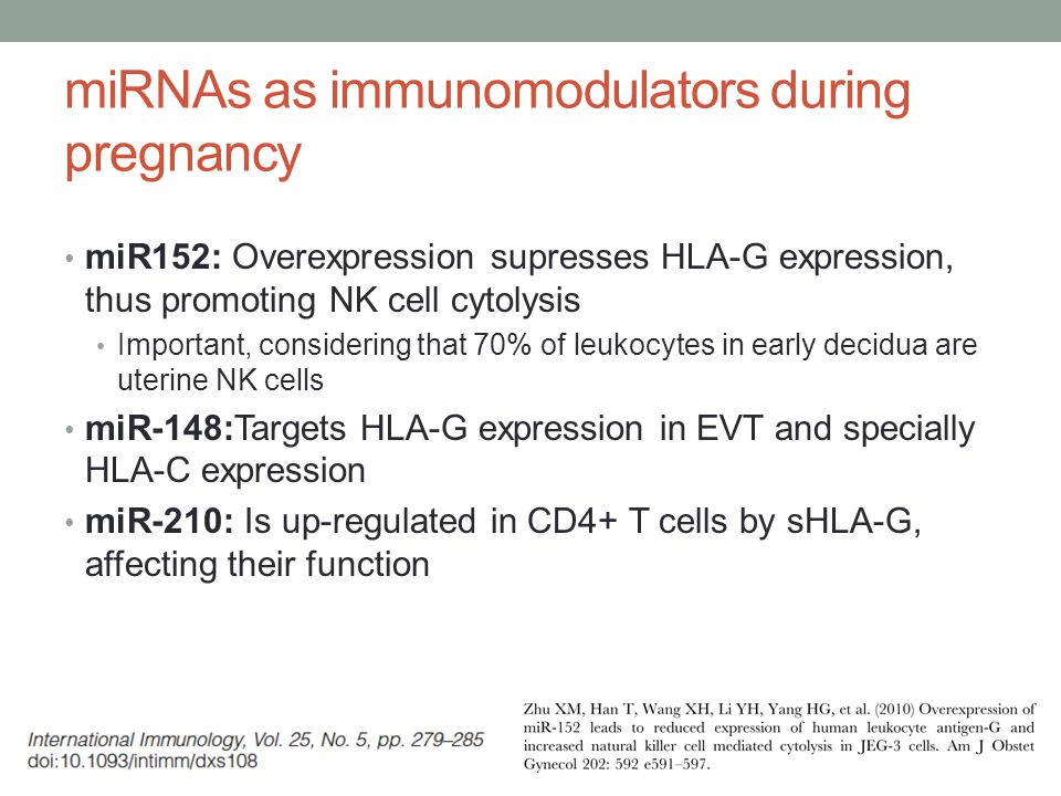 miRNAs as immunomodulators during pregnancy miR152: Overexpression supresses HLA-G expression, thus promoting NK cell cytolysis Important, considering that 70% of leukocytes in early decidua are uterine NK cells miR-148:Targets HLA-G expression in EVT and specially HLA-C expression miR-210: Is up-regulated in CD4+ T cells by sHLA-G, affecting their function