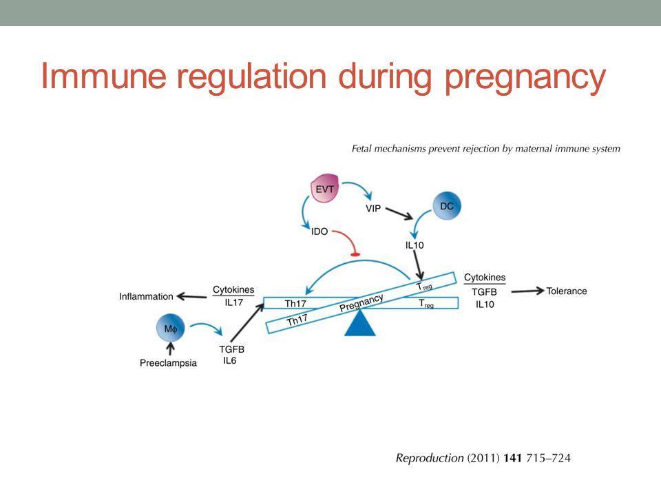 Immune regulation during pregnancy
