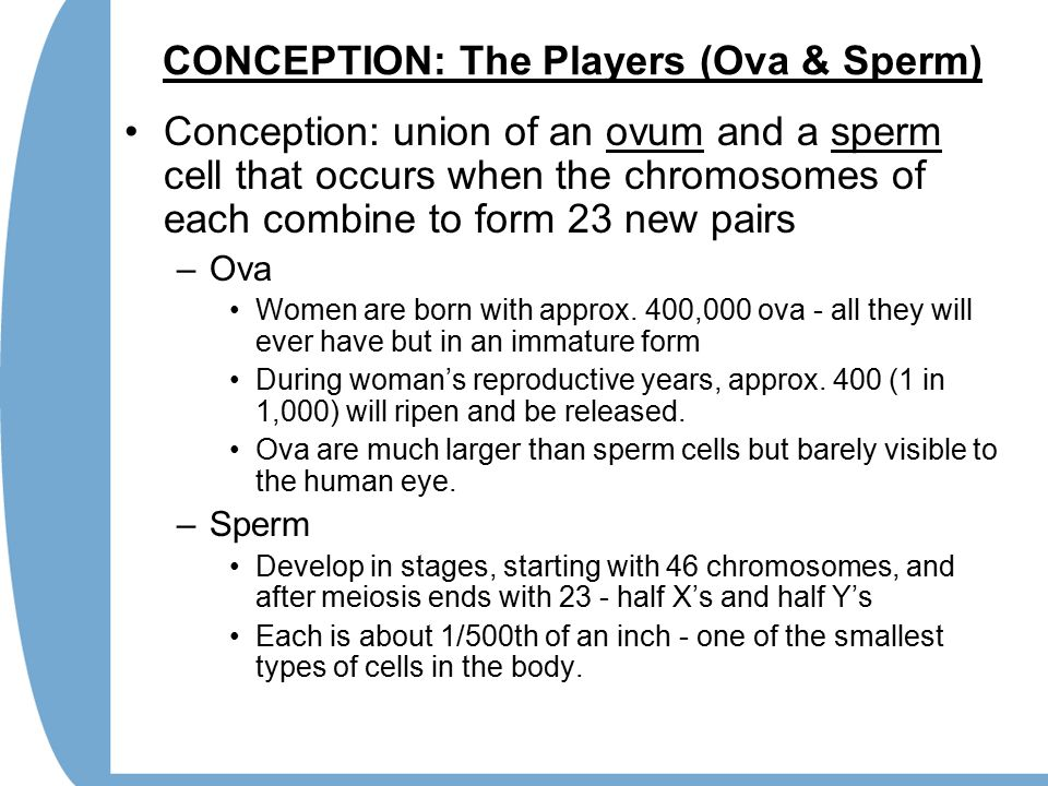 CONCEPTION: The Players (Ova & Sperm) Conception: union of an ovum and a sperm cell that occurs when the chromosomes of each combine to form 23 new pairs –Ova Women are born with approx.