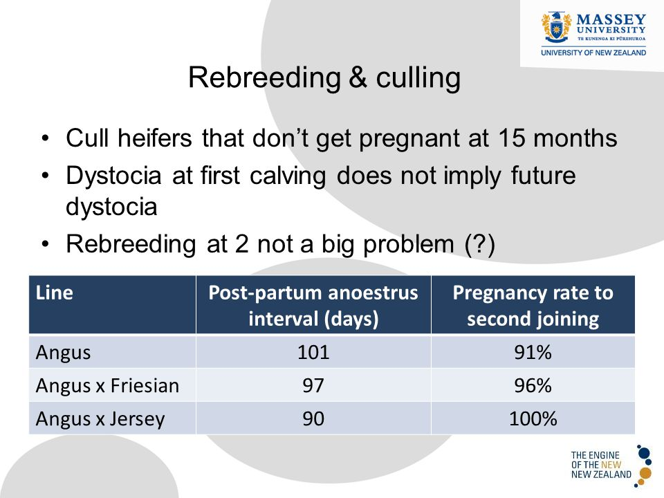 Cull heifers that don't get pregnant at 15 months Dystocia at first calving does not imply future dystocia Rebreeding at 2 not a big problem ( ) Rebreeding & culling LinePost-partum anoestrus interval (days) Pregnancy rate to second joining Angus10191% Angus x Friesian9796% Angus x Jersey90100%