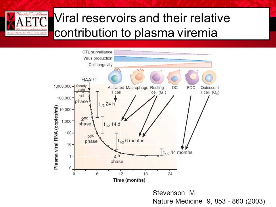 Viral reservoirs and their relative contribution to plasma viremia Stevenson, M. Nature Medicine 9, 853 - 860 (2003)