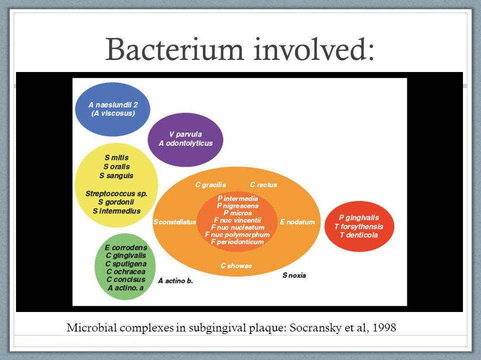 Bacterium involved: Microbial complexes in subgingival plaque: Socransky et al, 1998