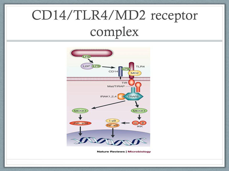 CD14/TLR4/MD2 receptor complex