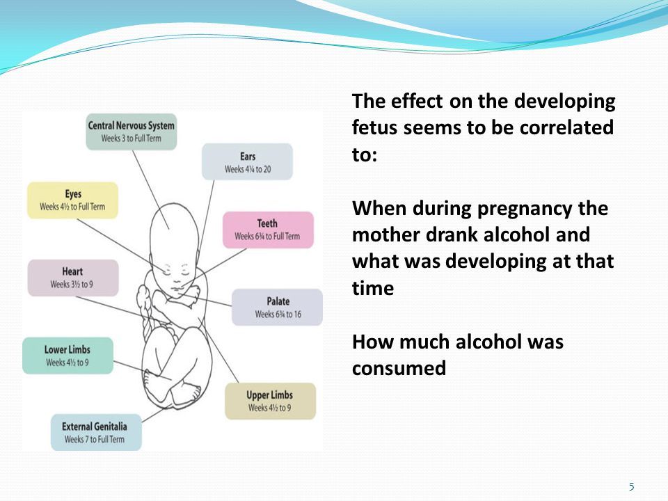 5 The effect on the developing fetus seems to be correlated to: When during pregnancy the mother drank alcohol and what was developing at that time How much alcohol was consumed