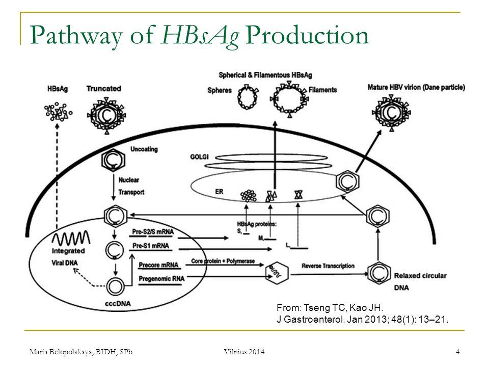 Maria Belopolskaya, BIDH, SPb Vilnius 2014 15 Methods HBV DNA quantization  COBAS TaqMan HBV test (Roche Diagnostics)  Lower limit of detection — 150 IU/ml HBsAg quantization  Architect HBsAg QT (Abbott Laboratories)  HBsAg from 0.05 to 250 IU/ml (HBsAg level > 250 IU/ml — 1 : 500 dilution)  Upper limit of detection — 125 000 IU/ml.
