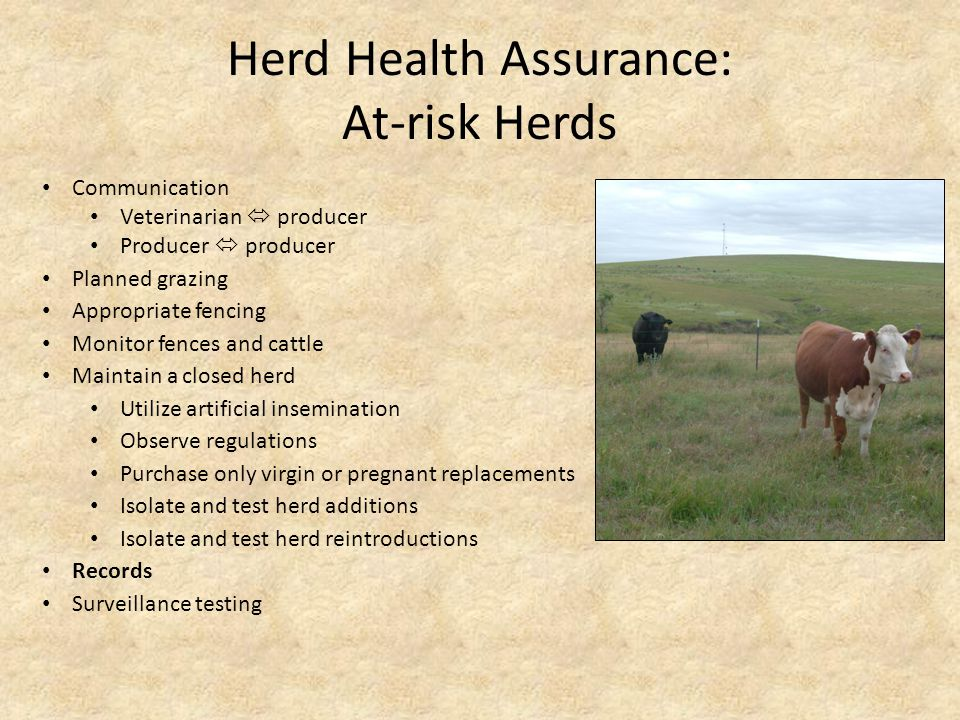 Herd Health Assurance: At-risk Herds Communication Veterinarian  producer Producer  producer Planned grazing Appropriate fencing Maintain a closed herd Monitor fences and cattle Observe regulations Purchase only virgin or pregnant replacements Isolate and test herd additions Isolate and test herd reintroductions Utilize artificial insemination Surveillance testing Records