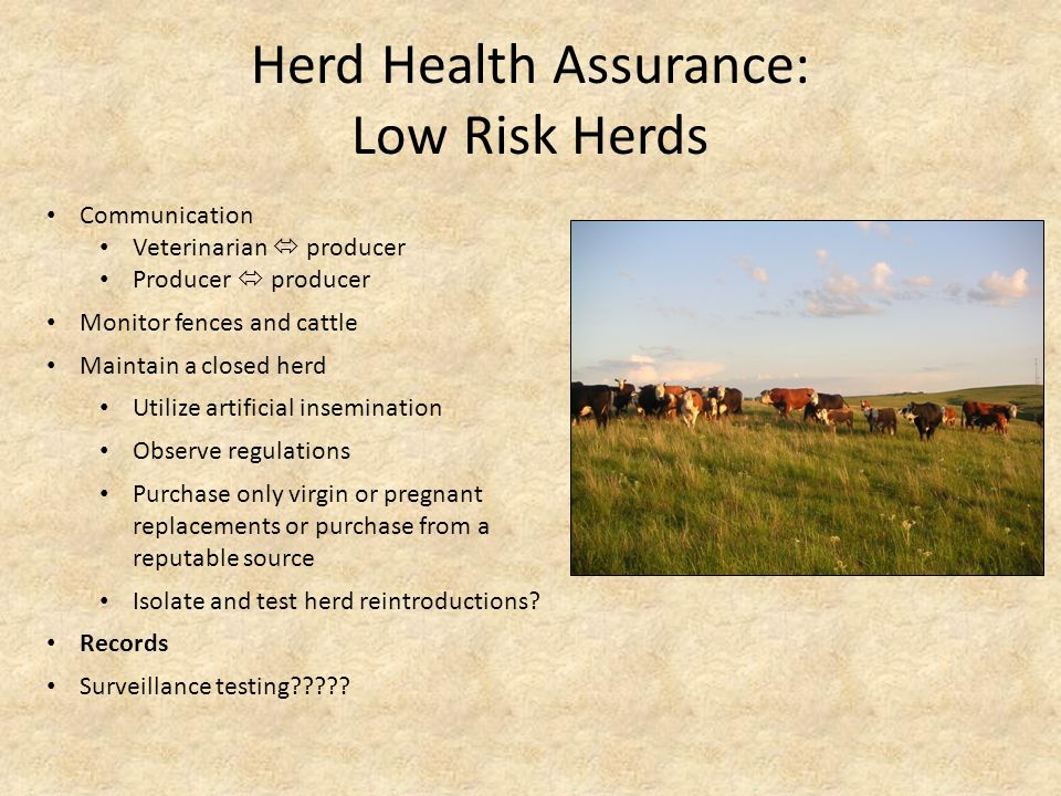 Herd Health Assurance: Low Risk Herds Communication Veterinarian  producer Producer  producer Maintain a closed herd Monitor fences and cattle Observe regulations Purchase only virgin or pregnant replacements or purchase from a reputable source Isolate and test herd reintroductions.