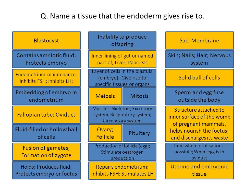 Q. Name a tissue that the endoderm gives rise to.