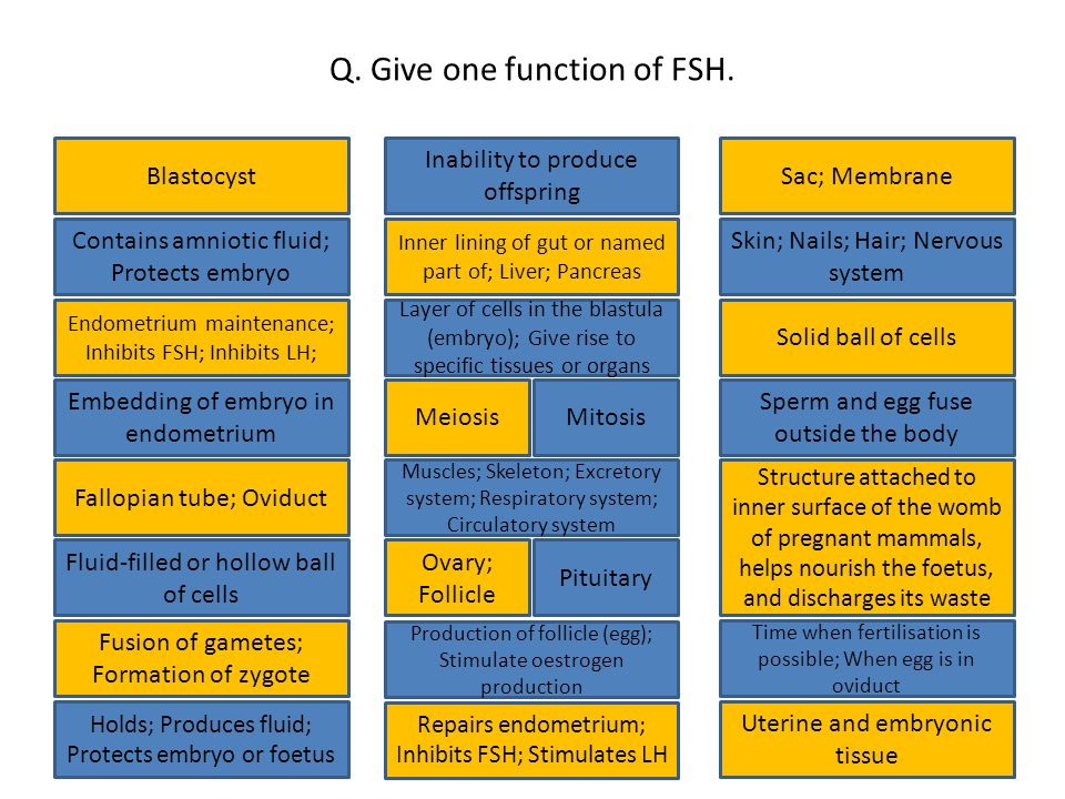 Q. Give one function of FSH.