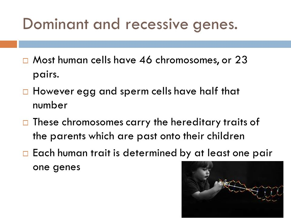 Dominant and recessive genes. Most human cells have 46 chromosomes, or 23 pairs.