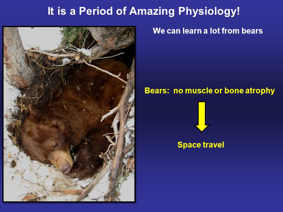 Bears: no muscle or bone atrophy Space travel It is a Period of Amazing Physiology.