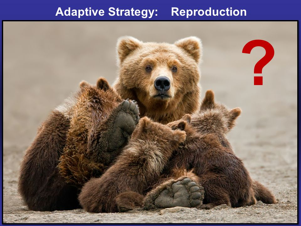 Adaptive Strategy: ? Reproduction
