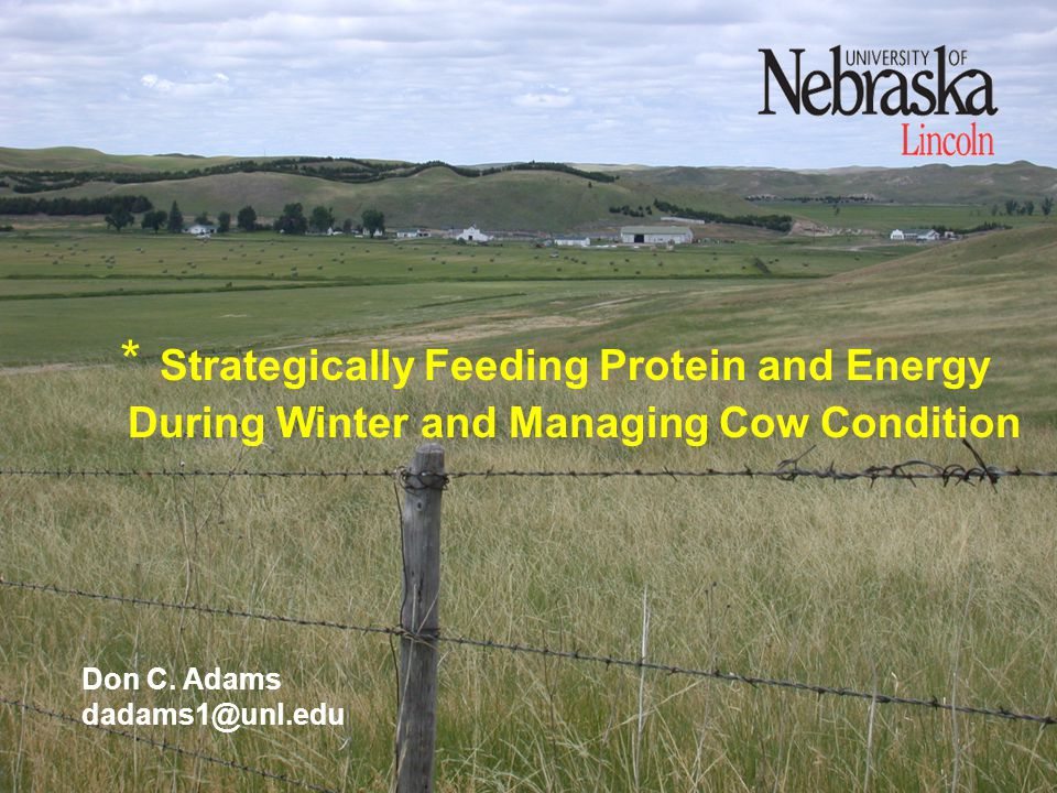 * Strategically Feeding Protein and Energy During Winter and Managing Cow Condition Don C.