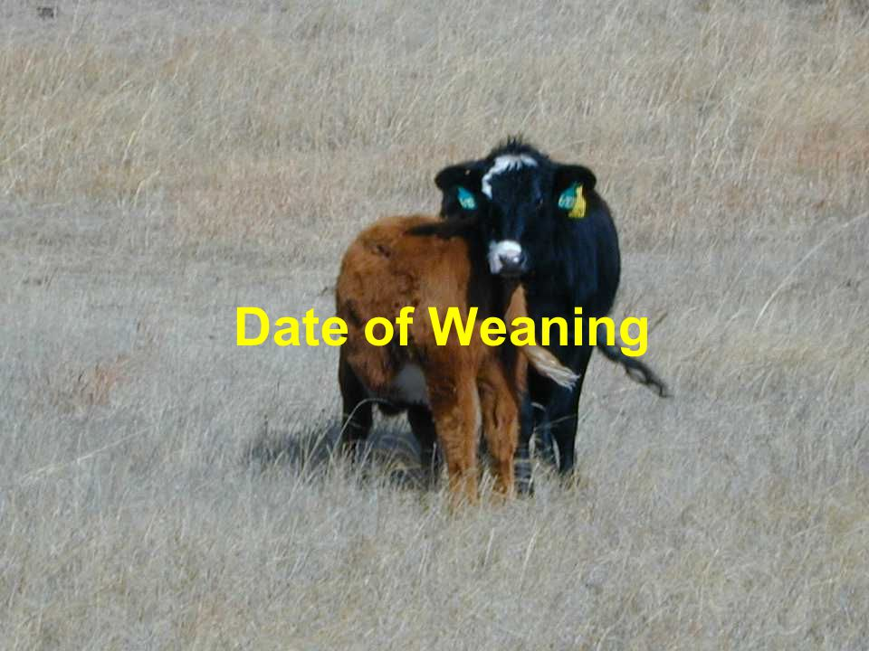 Date of Weaning