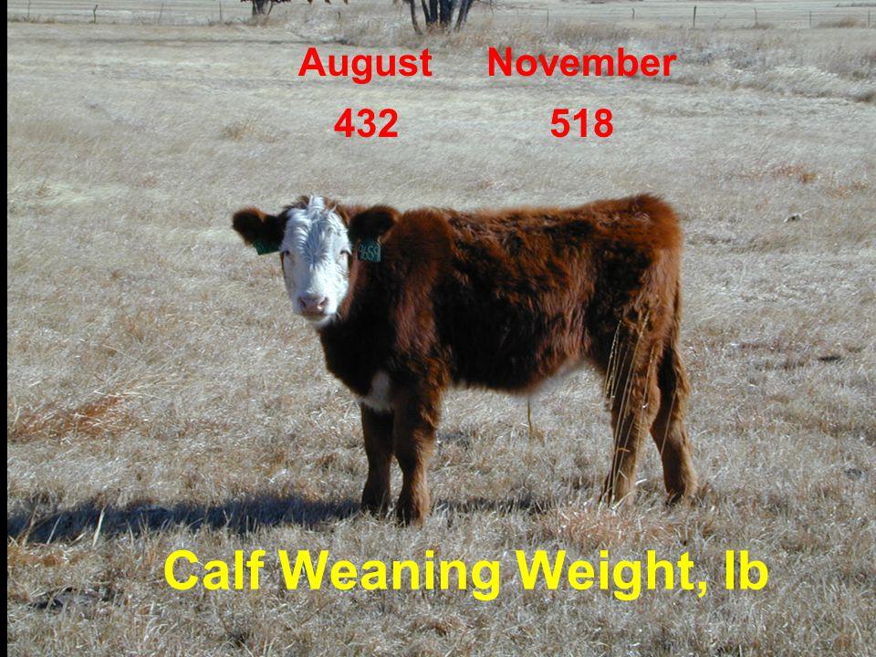August November 432 518 Calf Weaning Weight, lb