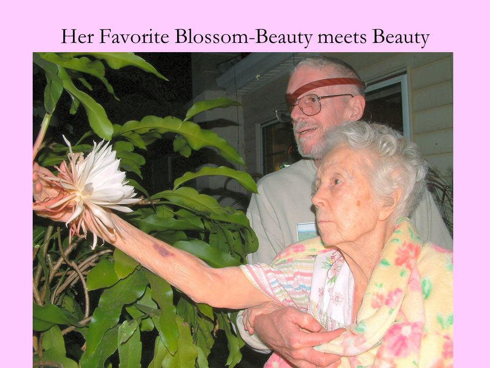 Her Favorite Blossom-Beauty meets Beauty