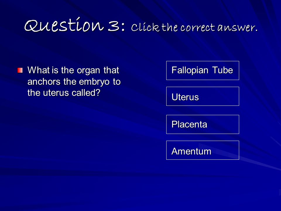 Question 3: Click the correct answer. What is the organ that anchors the embryo to the uterus called? Fallopian Tube UterusPlacentaAmentum
