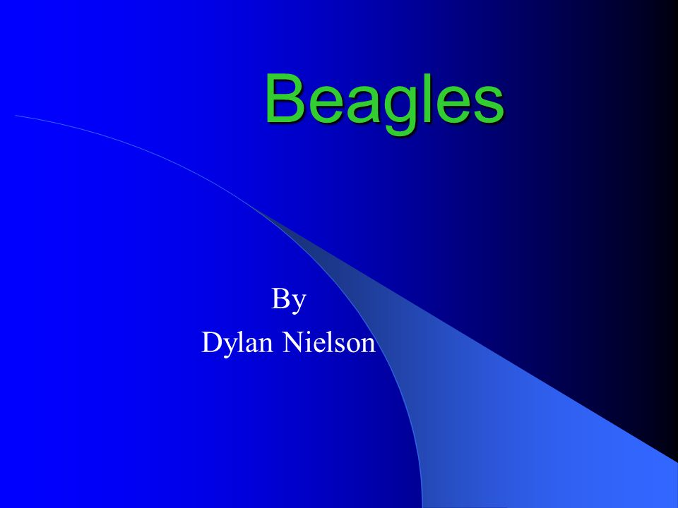 Beagles By Dylan Nielson