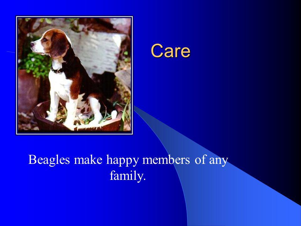 Care Beagles make happy members of any family.