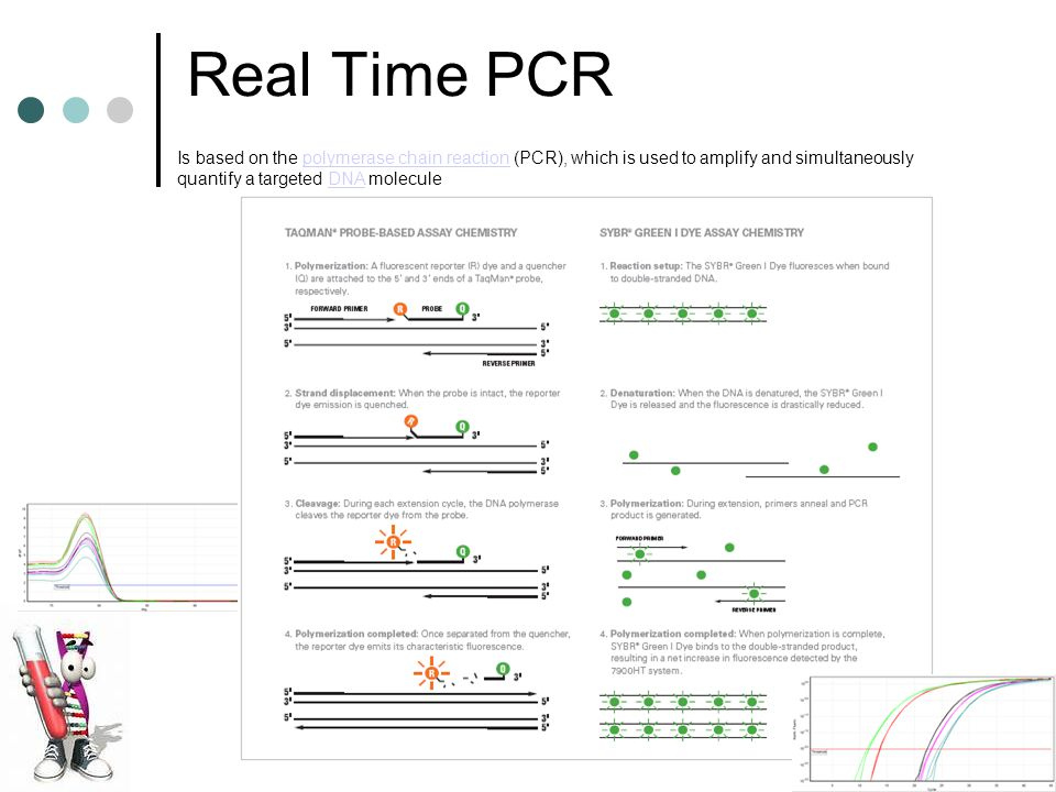 Real Time PCR Is based on the polymerase chain reaction (PCR), which is used to amplify and simultaneously quantify a targeted DNA moleculepolymerase chain reactionDNA