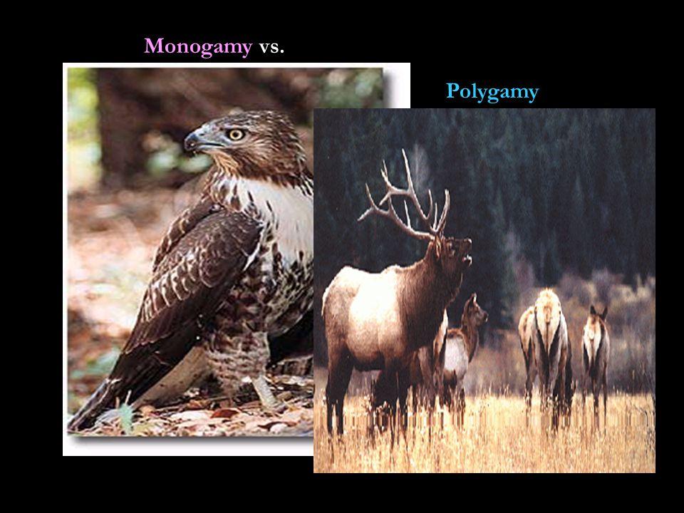 Monogamy vs. Polygamy
