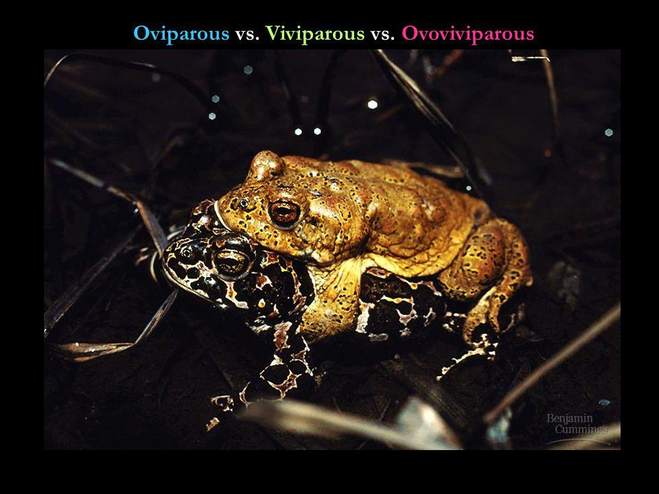 Oviparous vs. Viviparous vs. Ovoviviparous