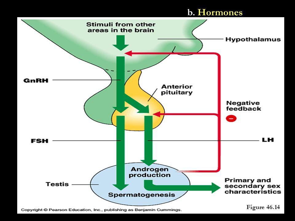 b. Hormones Figure 46.14