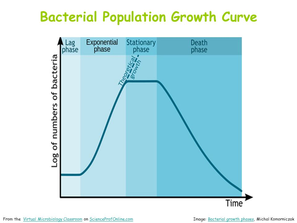 Bacterial Population Growth Curve Image: Bacterial growth phases, Michal KomorniczakBacterial growth phases From the Virtual Microbiology Classroom on ScienceProfOnline.comVirtual Microbiology ClassroomScienceProfOnline.com