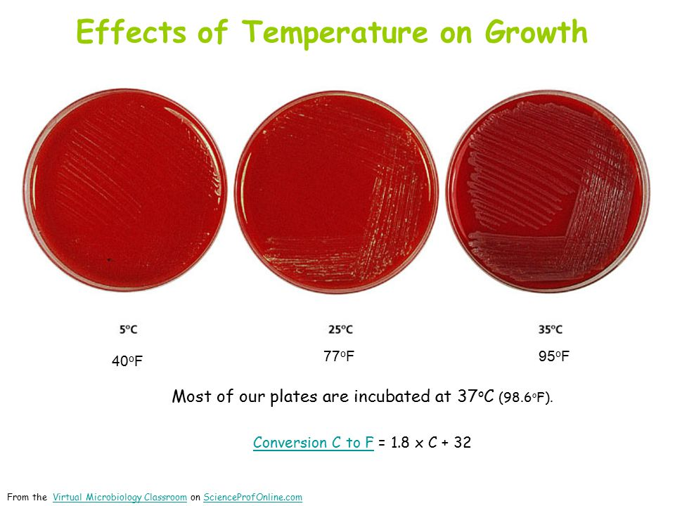 Effects of Temperature on Growth 95 o F 77 o F 40 o F Most of our plates are incubated at 37 o C (98.6 o F).