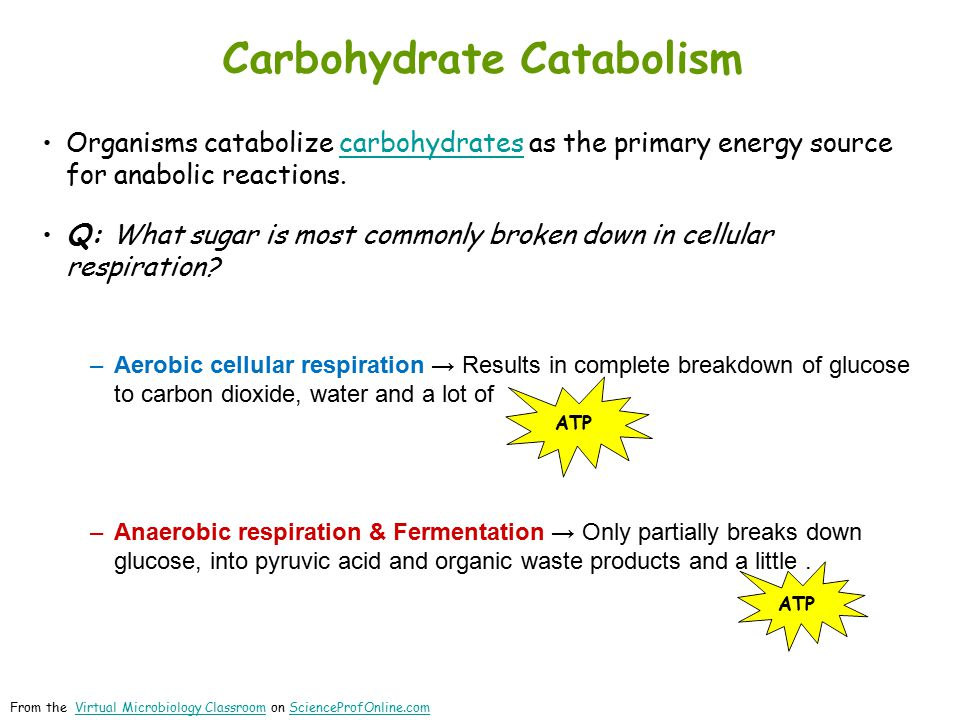 Organisms catabolize carbohydrates as the primary energy source for anabolic reactions.carbohydrates Q: What sugar is most commonly broken down in cellular respiration.