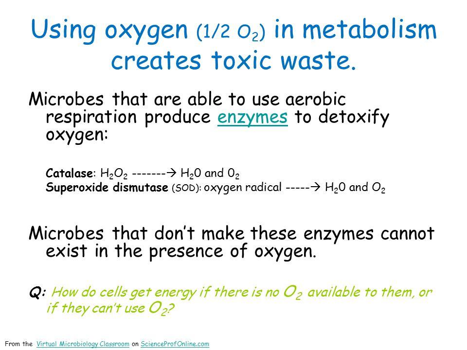 Using oxygen (1/2 O 2 ) in metabolism creates toxic waste.