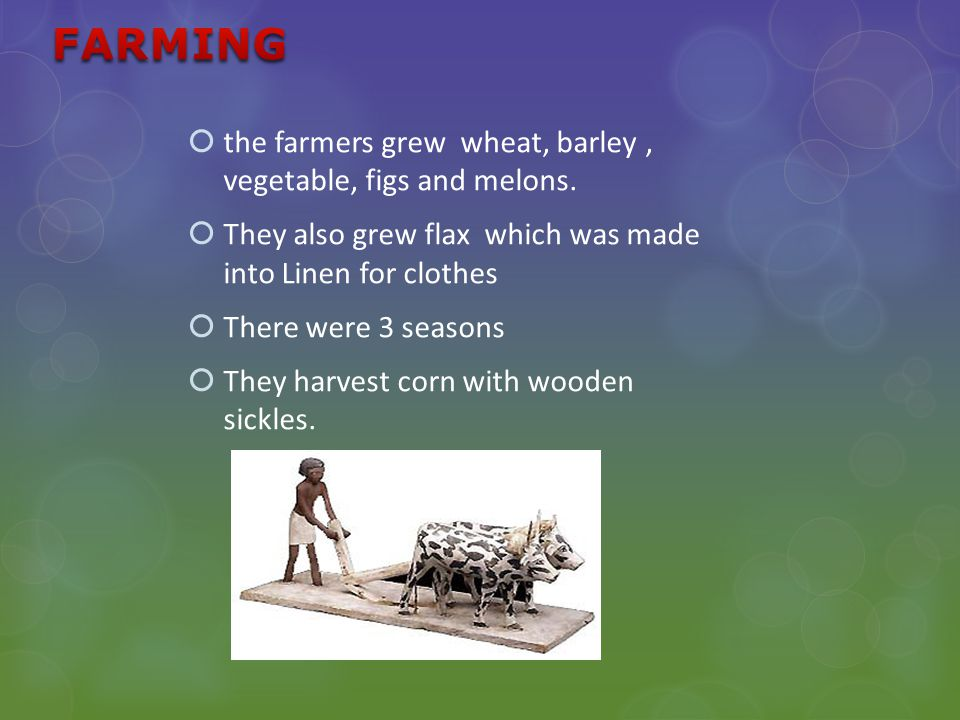  the farmers grew wheat, barley, vegetable, figs and melons.