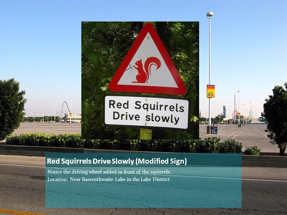 Red Squirrels Drive Slowly (Modified Sign) Notice the driving wheel added in front of the squirrels.