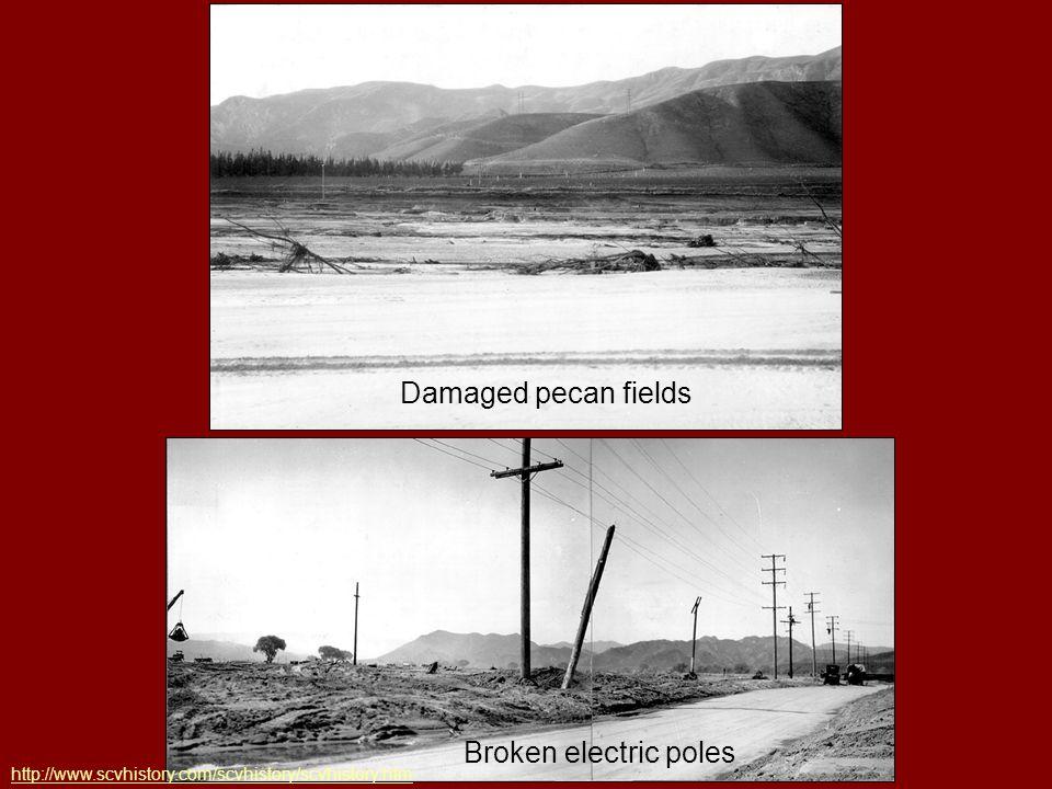 Damaged pecan fields Broken electric poles http://www.scvhistory.com/scvhistory/scvhistory.htm