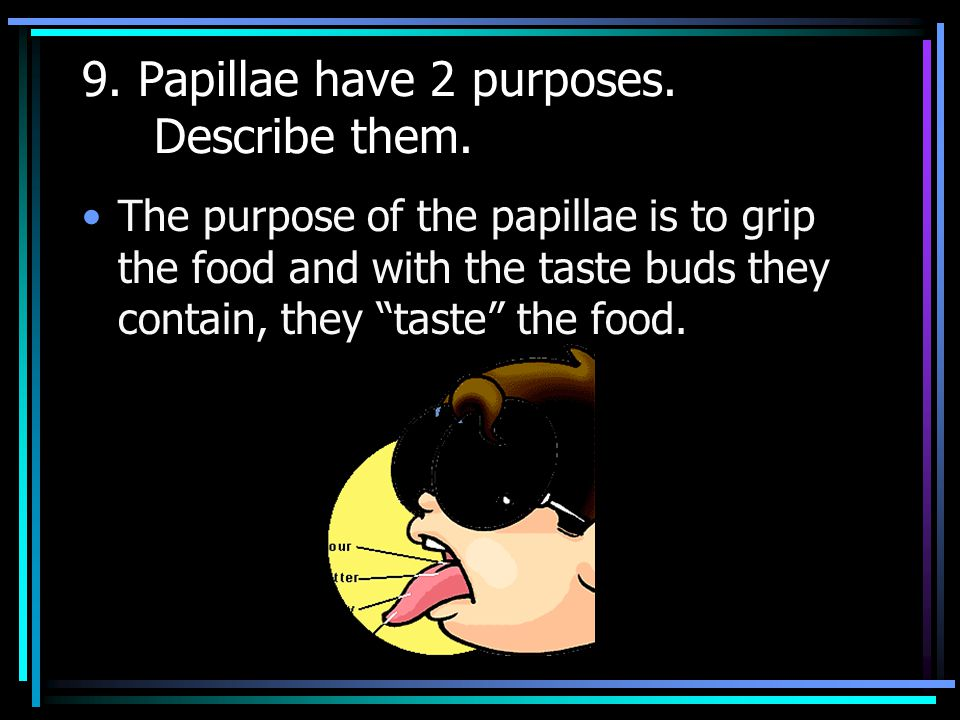 8. Name and describe the 3 different types of papillae.