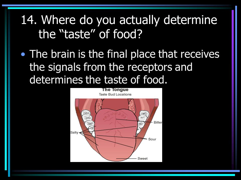 13. Explain the relationship between cilia and taste buds.